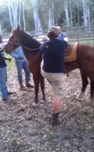 cheval coup de pied