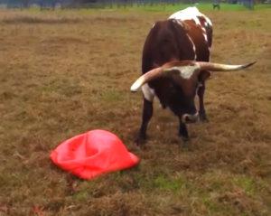 taureau triste ballon rouge